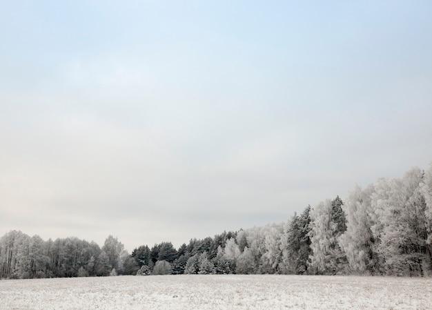 Árvores decíduas sem pomar no inverno, galhos cobertos por uma espessa camada de neve após a tempestade, céu ao fundo