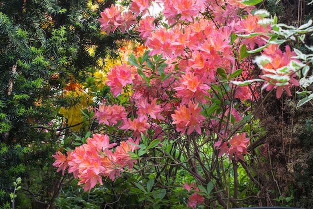 Árvores decorativas, arbustos e flores no jardim rododendro, samambaias, orquídeas