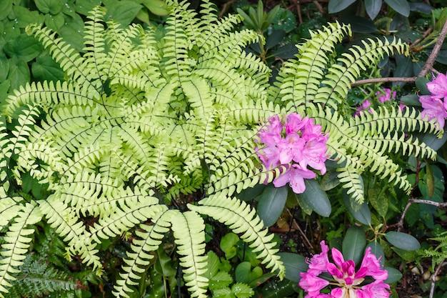 Árvores decorativas. arbustos e flores no jardim: rododendros, samambaias, orquídeas