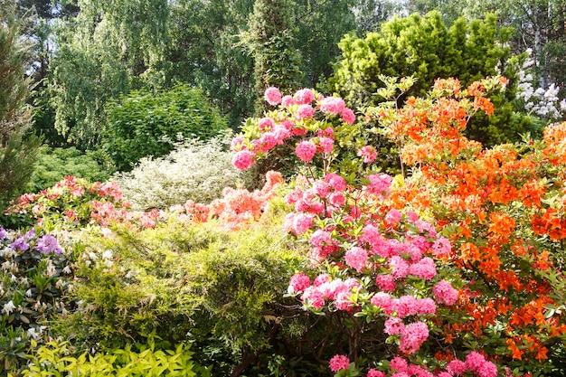 Árvores decorativas. arbustos e flores no jardim