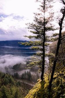 Árvores densas da floresta sem folhas