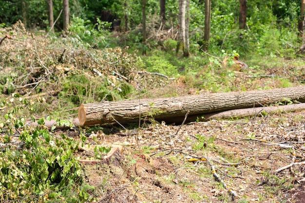 Árvores derrubadas em um dia de verão