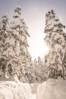 Árvores do inverno cobertas com a neve (imagem processada vinta filtrada