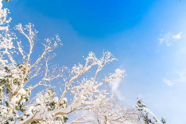 Árvores do inverno coberto com a neve