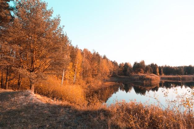 Árvores douradas do outono em uma costa de algum corpo de água pequeno lago ou rio na europa central