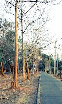 Árvores e estrada no parque