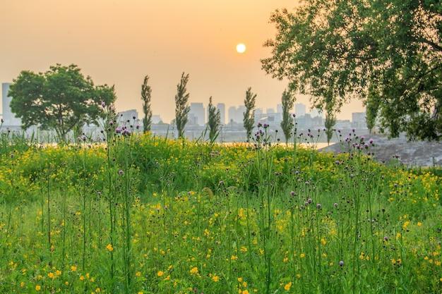 Árvores e flores em seul, coreia do sul, durante o pôr do sol com edifícios