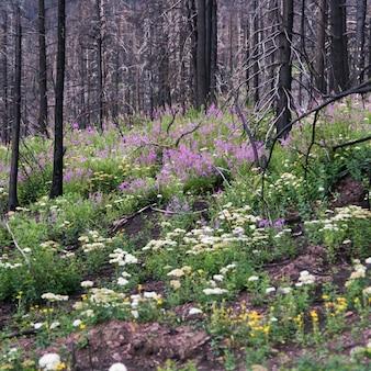 Árvores, e, flores, em, um, floresta, parque nacional geleira, geleira, município, montana, eua