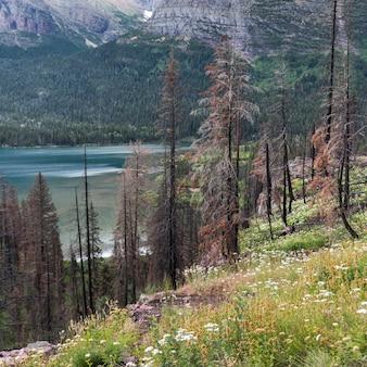 Árvores, e, flores, ligado, um, lado montanha, parque nacional geleira, geleira, município, montana, eua