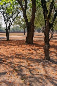 Árvores e flores no terreno do parque histórico de sukhothai, na tailândia