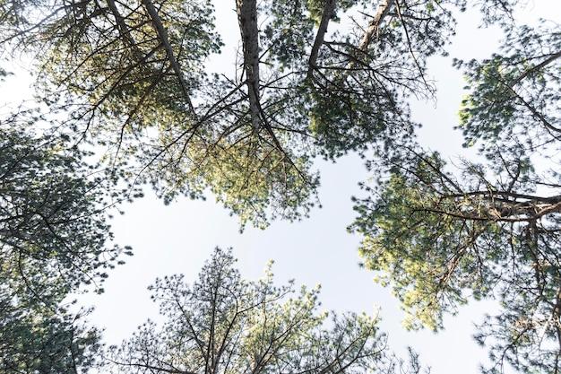 Árvores e fundos de floresta