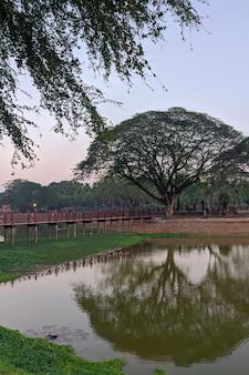 Árvores e lago no parque histórico de sukhothai, na tailândia