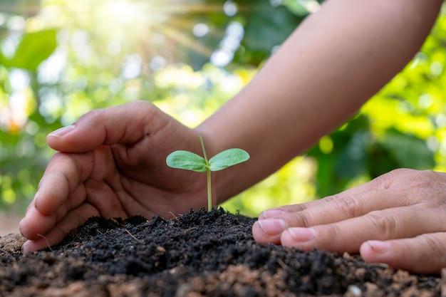 Árvores e mãos humanas plantando árvores no conceito de solo de reflorestamento e proteção ambiental.