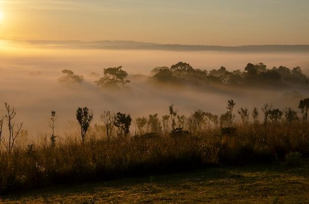 Árvores e montanhas com o céu e o sol da manhã no parque nacional