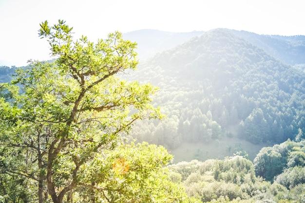 Árvores e montanhas, os cárpatos, vistas com filtro