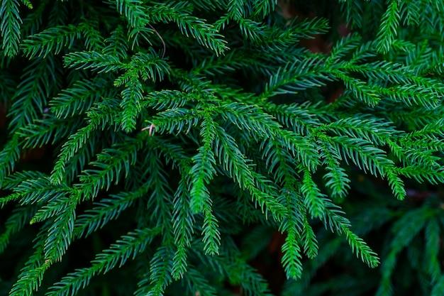 Árvores e plantas no jardim botânico. densa vegetação verde no jardim botânico. tenerife. espanha.