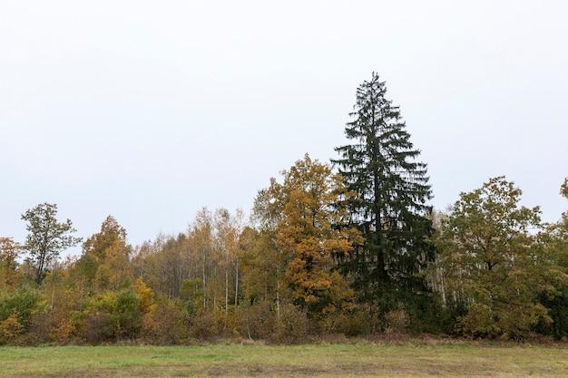 Árvores e plantas representadas que crescem no território da floresta. temporada de outono, imagem monocromática nublada e escura. o céu ao fundo