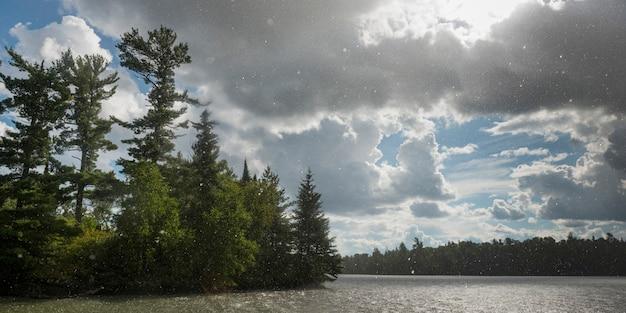 Árvores, em, a, lakeside, com, flocos, de, neve caindo, lago, de, a, madeiras, ontário, canadá