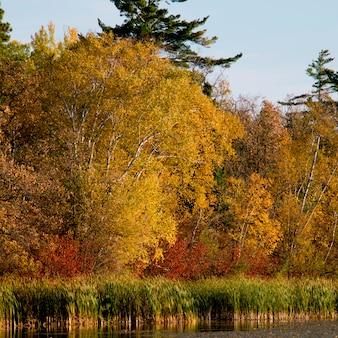 Árvores, em, a, lakeside, lago, de, a, madeiras, ontário, canadá