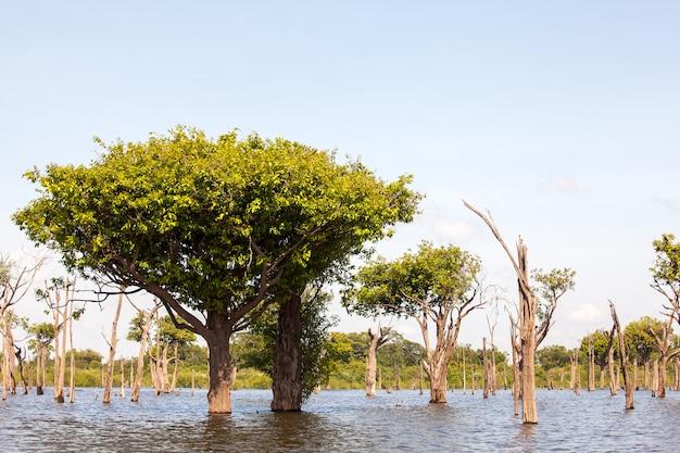 Árvores em igarapé no rio amazonas