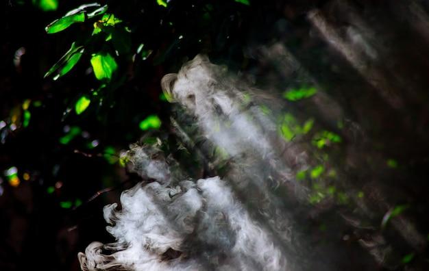 Árvores em puffs de fumaça contra os raios do sol fazem o seu caminho através da fumaça