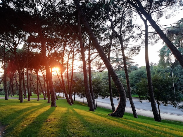 Árvores em um campo verde plantadas próximas umas das outras durante o pôr do sol