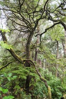 Árvores, em, um, floresta, pettinger, ponto, cox, baía, parque nacional beira pacífico, reserva, tofino, britânico, colu