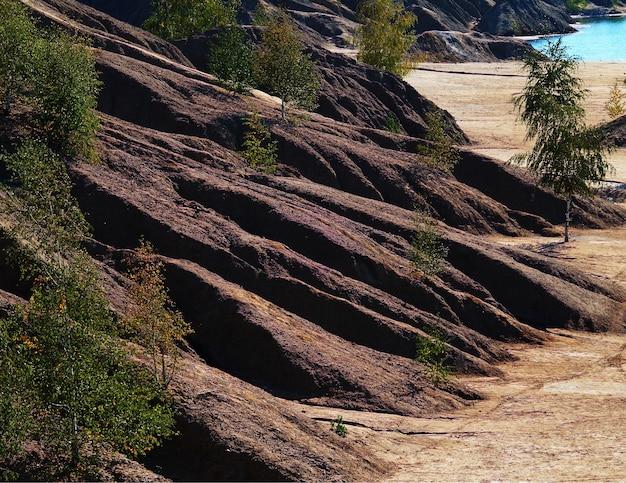 Árvores em um fundo de paisagem em declive de areia