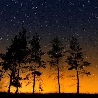 Árvores em um fundo do céu estrelado à noite