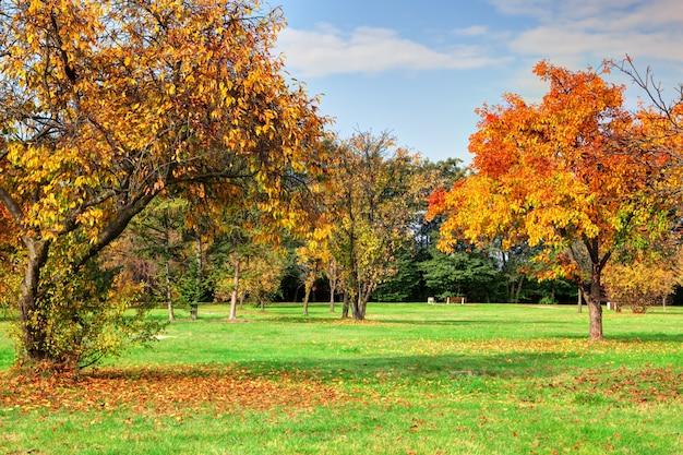 Árvores em um parque beleza
