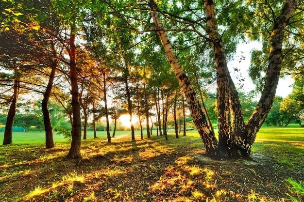 Árvores em um parque