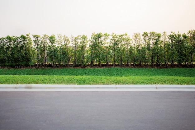 Árvores em um parque.