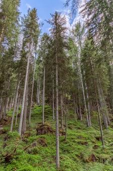 Árvores em uma colina na floresta sob um céu azul com nuvens