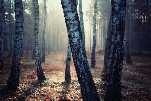 Árvores em uma floresta