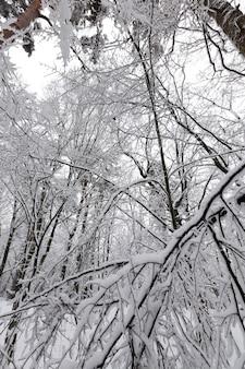 Árvores estão cobertas de neve Foto Premium
