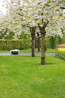 Árvores florescendo na primavera em gramado verde