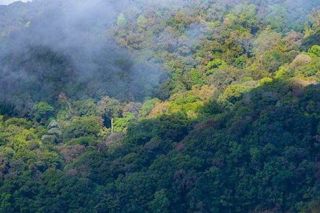 Árvores florestais. madeira verde natureza