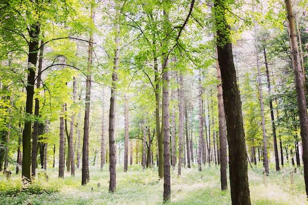 Árvores florestais, natureza, verde, madeira, luz solar, fundos