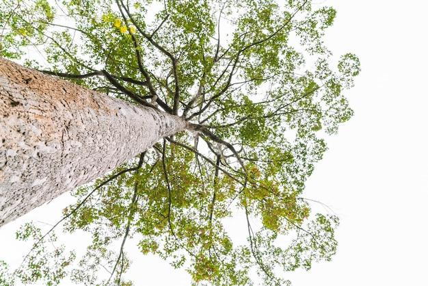 Árvores florestais