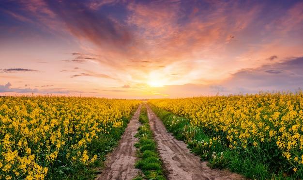 Árvores floridas ao pôr do sol nas montanhas
