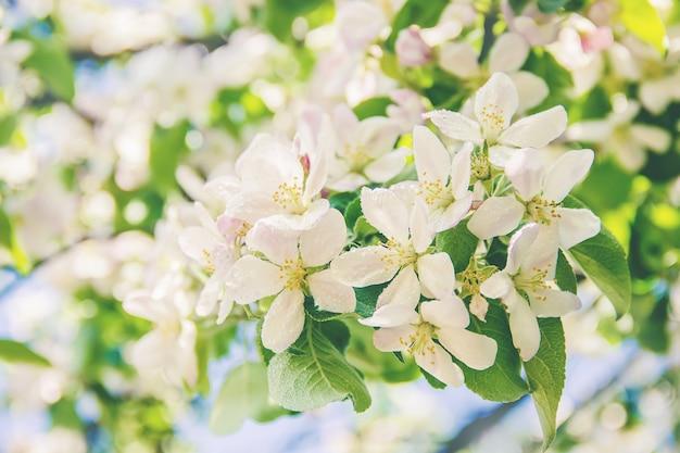 Árvores floridas de primavera