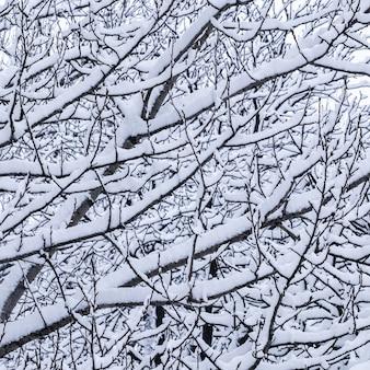 Árvores fofas cobertas de neve de conto de fadas ramificam paisagens naturais com neve branca e neve fria