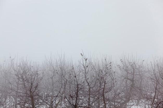 Árvores frutíferas são macieiras no inverno