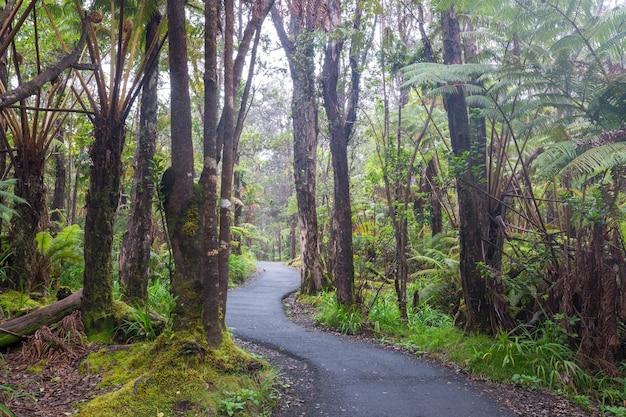 Árvores gigantes de samambaias na floresta tropical, ilha do havaí