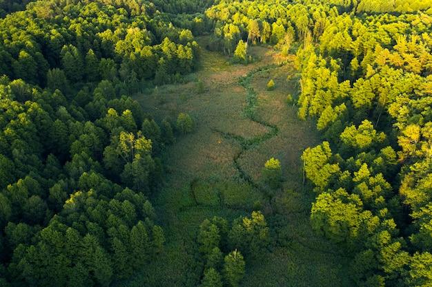 Árvores, juncos e rio, pântanos perto da floresta, vista superior. paisagem de verão maravilhosa, vista do zangão. fundo natural abstrato.