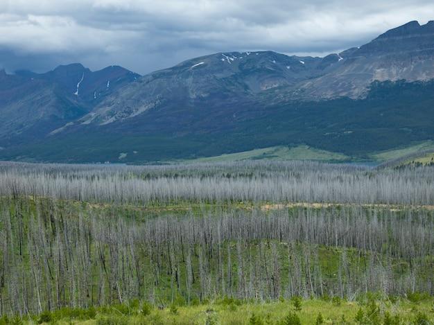 Árvores, ligado, paisagem, com, alcance montanha, em, a, fundo, indo-para-a-sol, estrada, geleira, nacional, pa