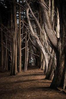 Árvores marrons em solo marrom