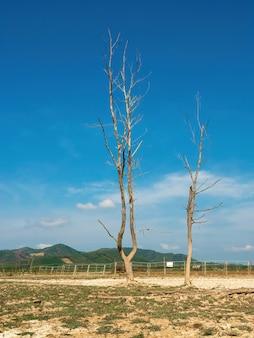 Árvores mortas e tocos com céu azul ao fundo