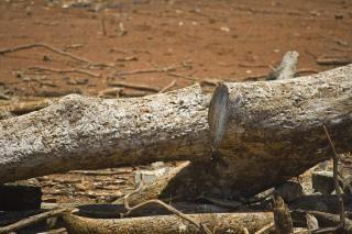 Árvores mortas, ensolarado