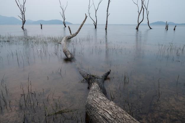 Árvores mortas na floresta ao redor de um lago com baixos níveis de água. tailândia